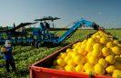 Itaueira Agropecuária se destaca na produção de frutas, mel, sucos a granel e camarão